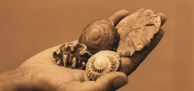 hand-mit-muscheln